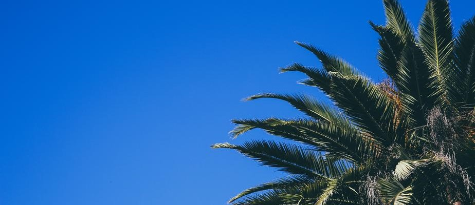 Palm Tree at Simi Valley California - CarDonations4Cancer.org