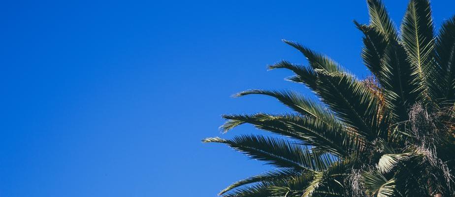 Palm Tree at Simi Valley California - CarDonations4Cancer.org