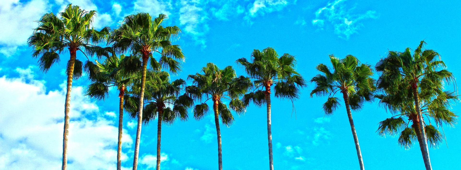 Palm Trees in Florida | Breast Cancer Car Donations