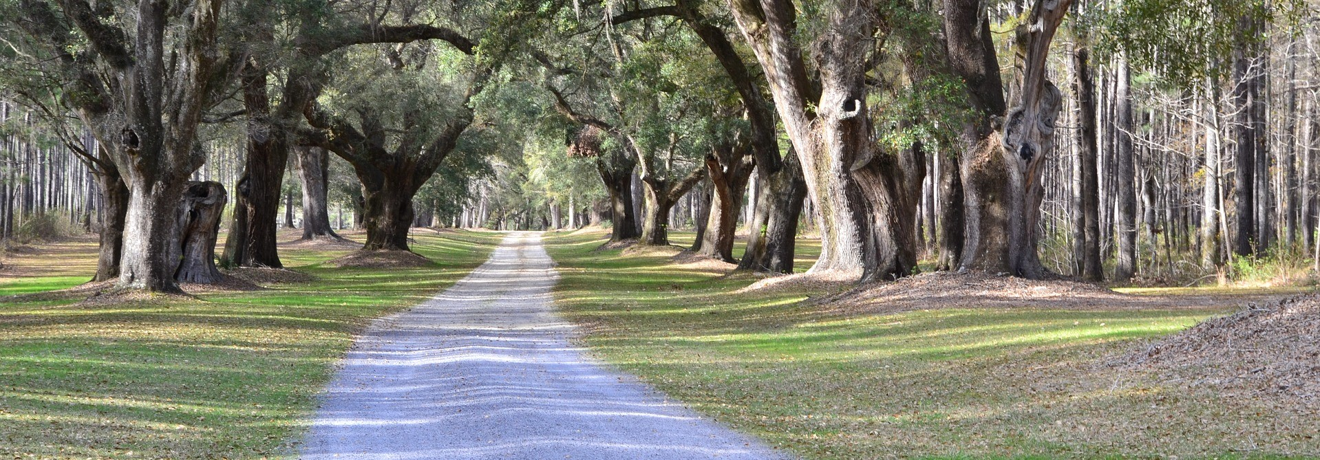 Oak Trees in South Carolina - CarDonations4Cancer.org