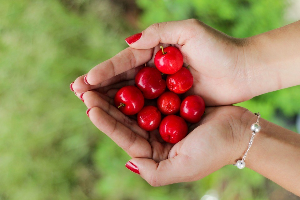 Freshly-Picked Cherries on a Fall | Breast Cancer Car Donations