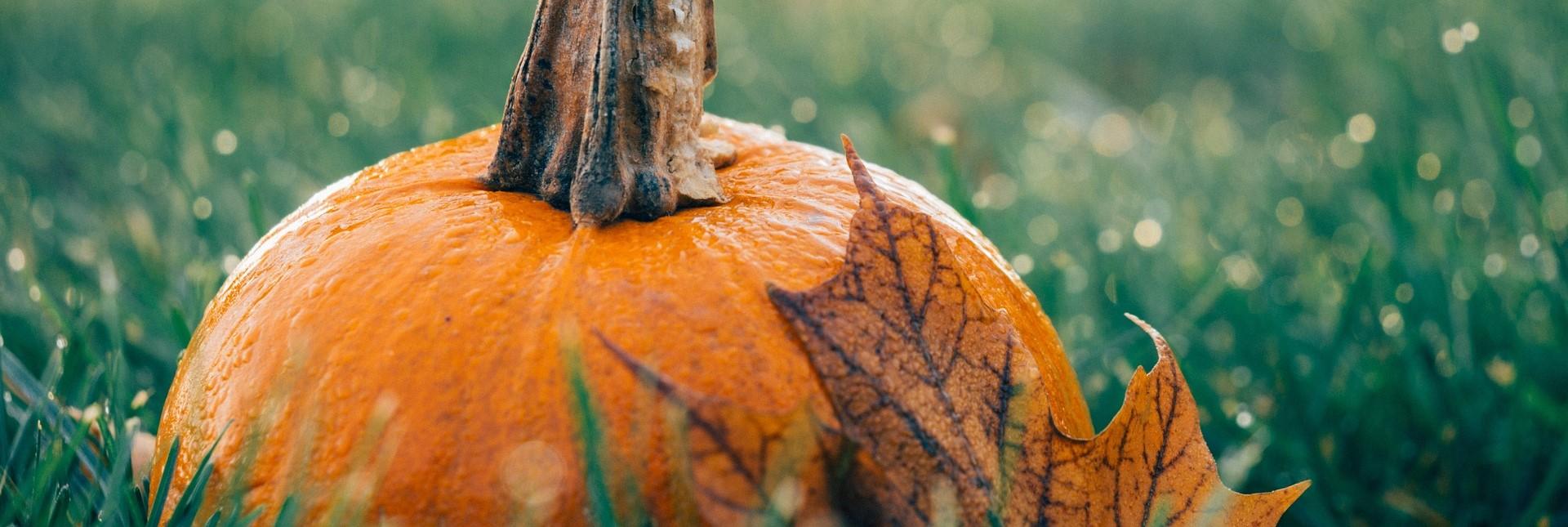 Pumpkin Picking this Autumn Season | Breast Cancer Car Donations
