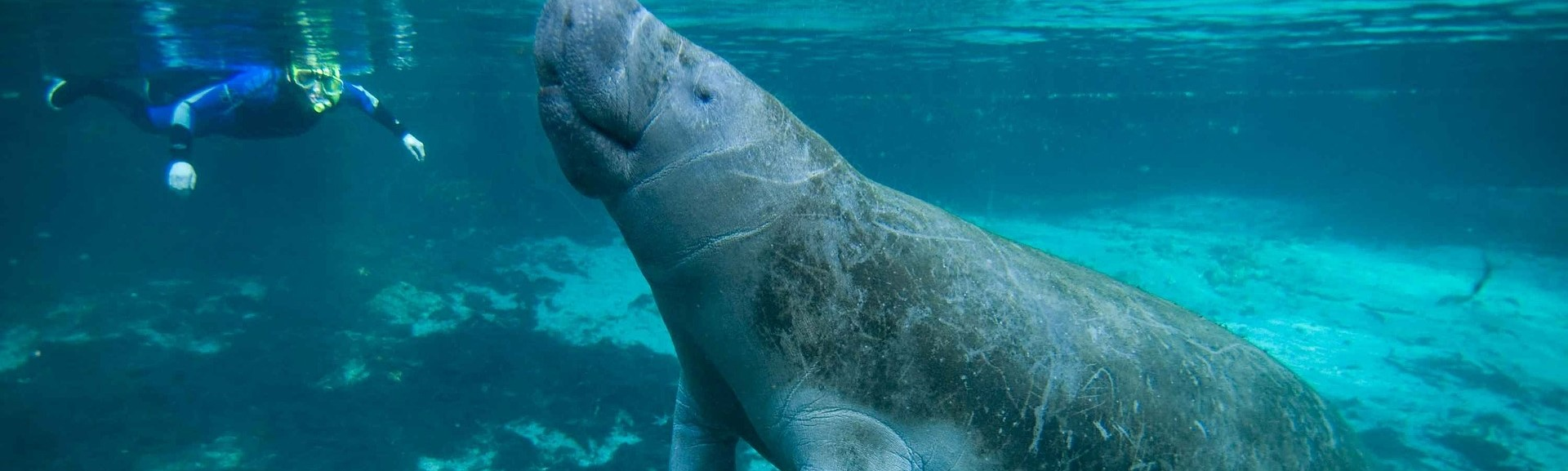 Swimming Together with Manatee | Breast Cancer Car Donations