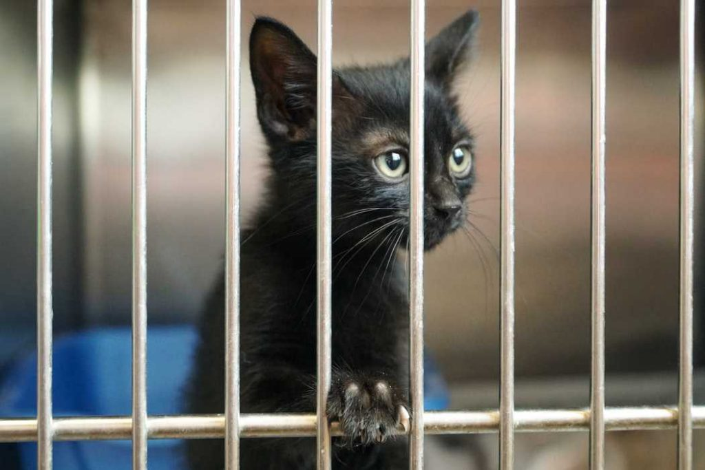 Cute Kitten in a Shelter | Breast Cancer Car Donations