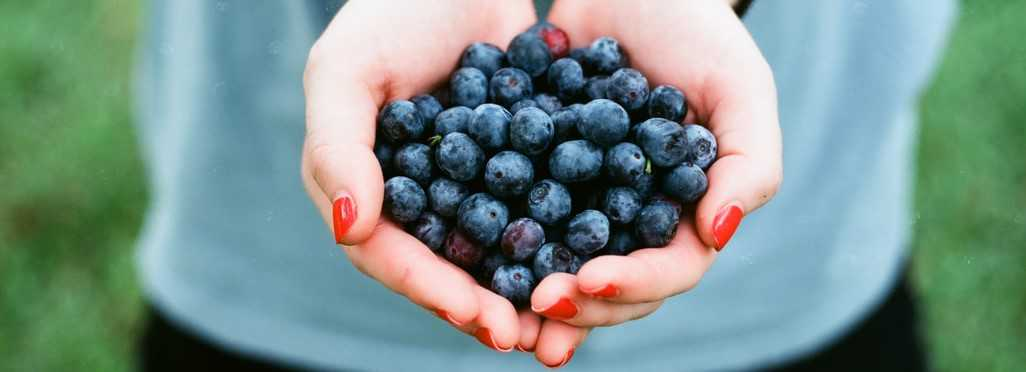Handful of Blueberries | Breast Cancer Car Donations