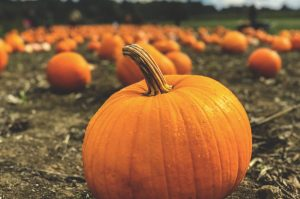 Pumpkin Patch in Daytime | Breast Cancer Car Donations
