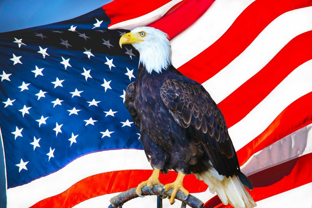 American Bald Eagle and the US Flag | Breast Cancer Car Donations