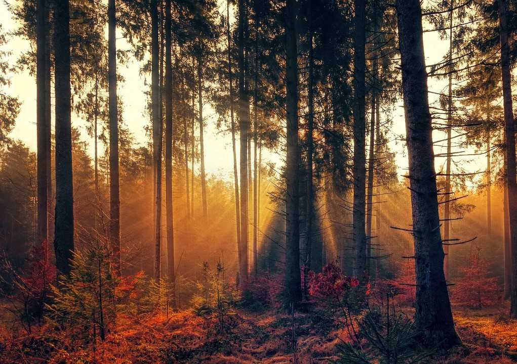 Autumn Morning in the Woods | Breast Cancer Car Donations